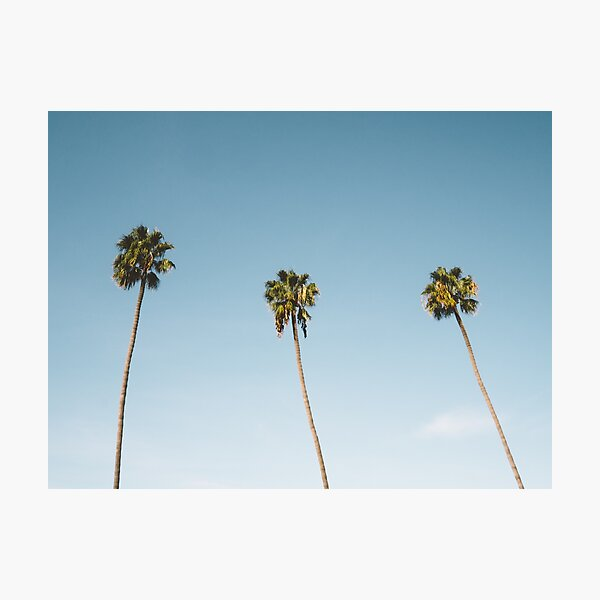 Three Palm Trees Blue Sky California Photographic Print