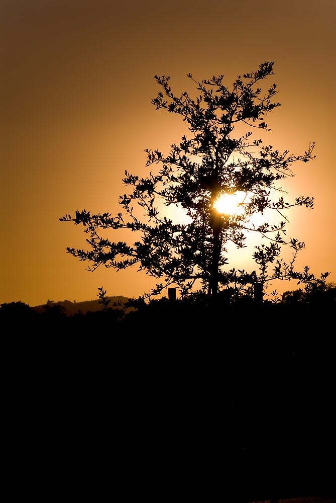 Tree of light by CarloDC