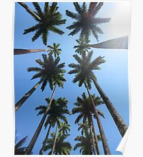 Palm Trees in California Poster