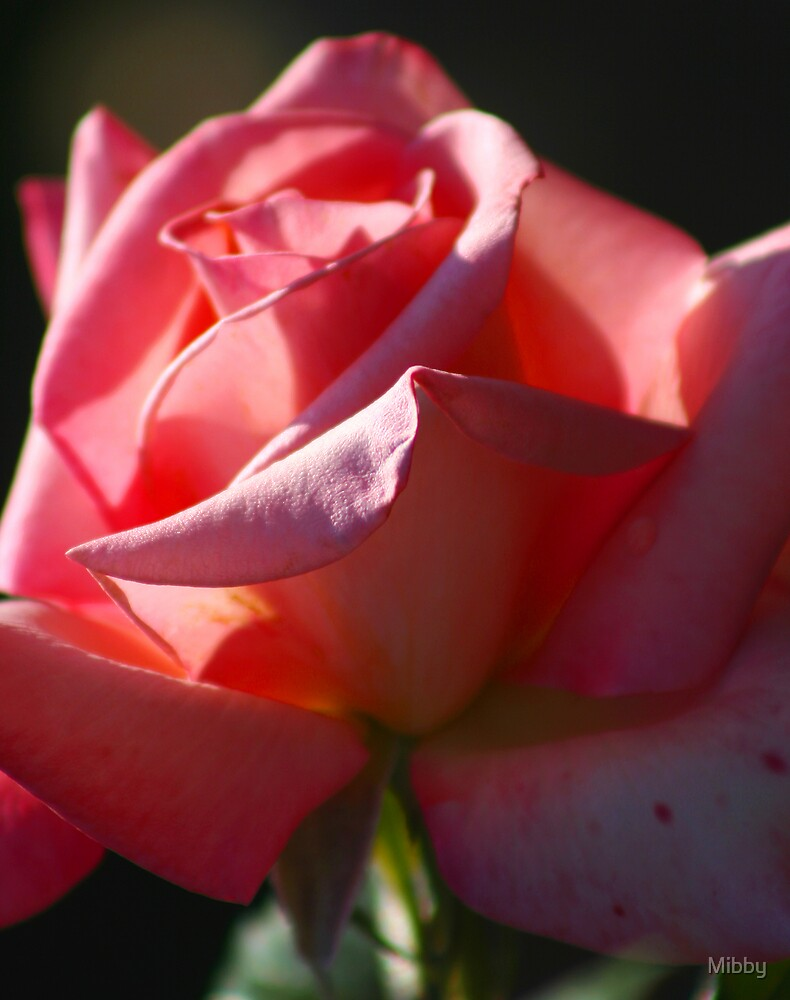 Pink Rose by Mibby