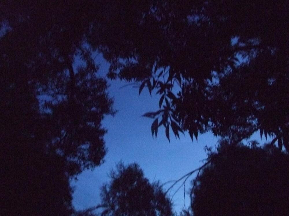 Crisp blue sky by Cassandra Devine