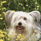 Little dog by ninamsc