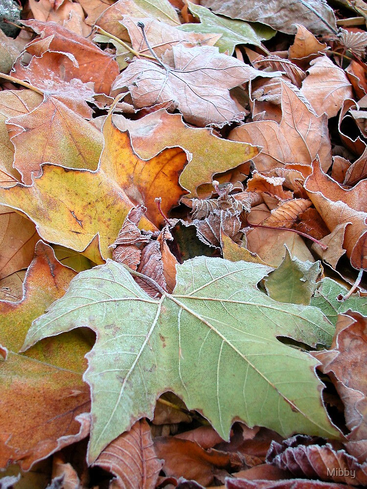 Frosted autumn leaves by Mibby
