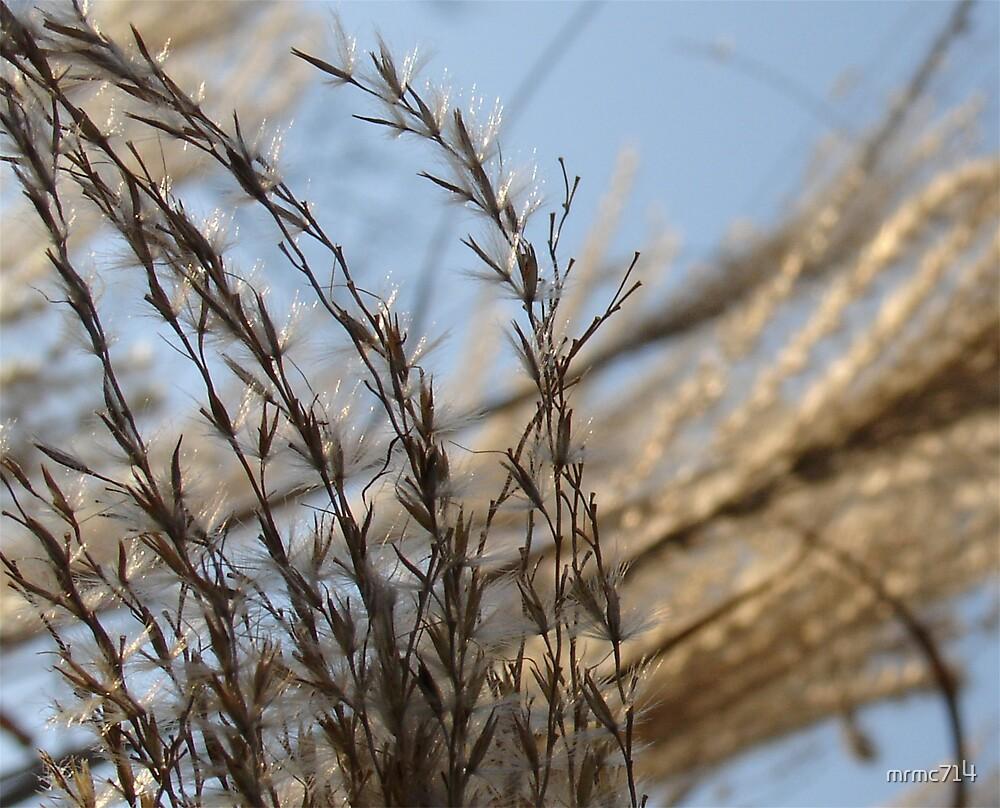 winter wheat by mrmc714