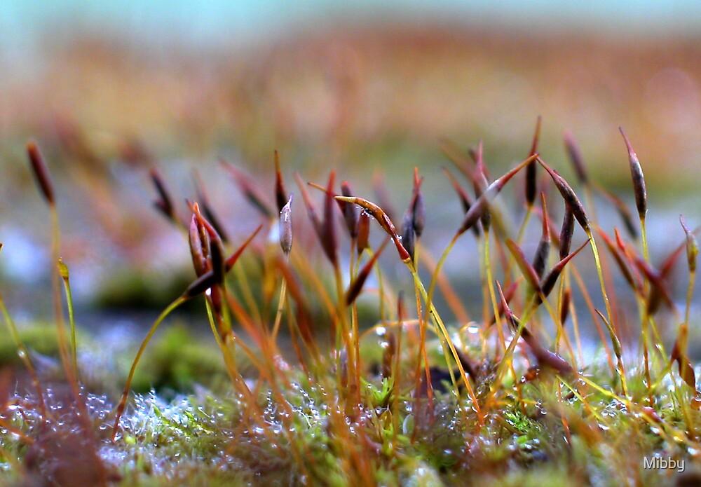 Lichen (Macro) by Mibby