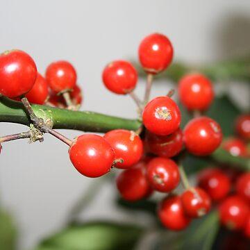 Holly Berries by RhiannonR
