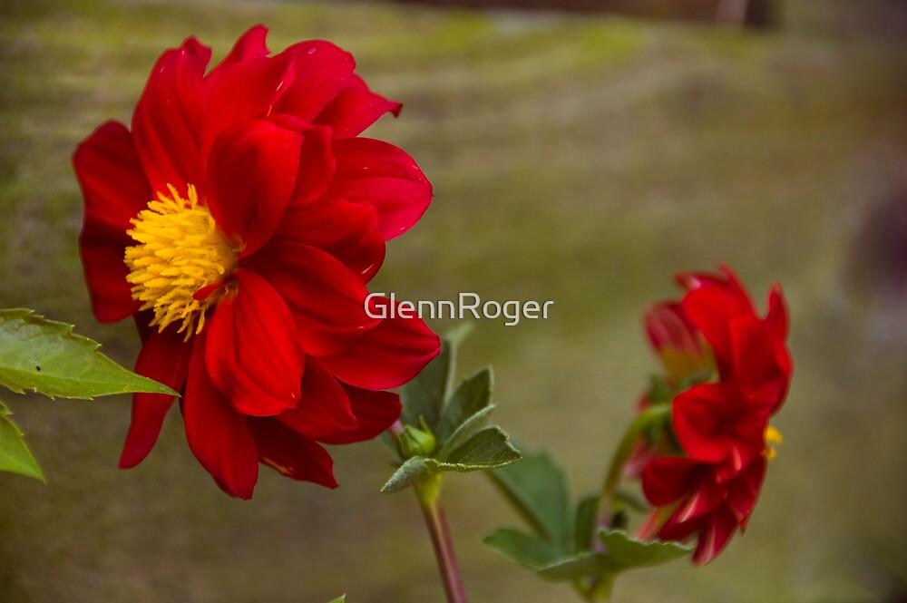 Lovers tiff by GlennRoger