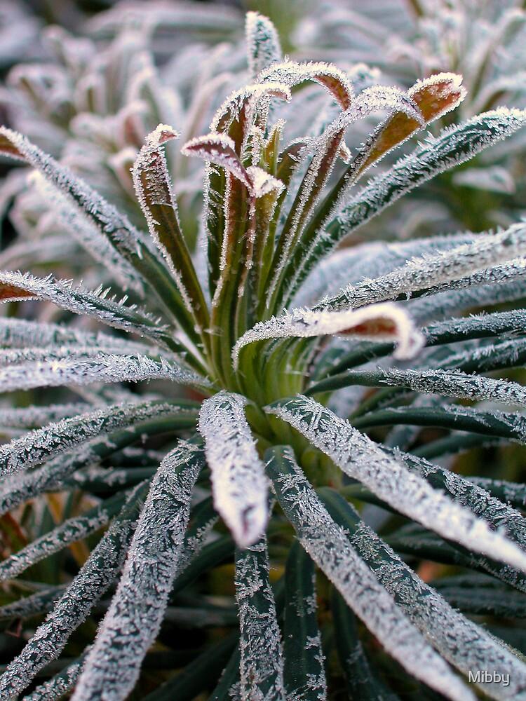 Jack Frost by Mibby