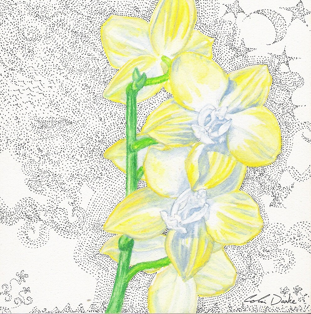 Yellow Orchid at Night by cdarke