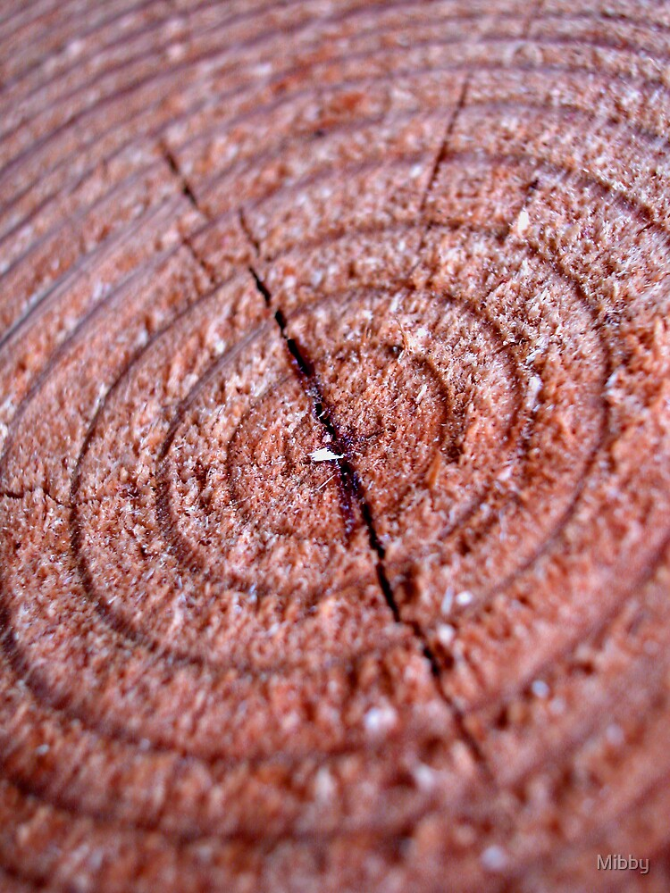 Tree circles macro by Mibby