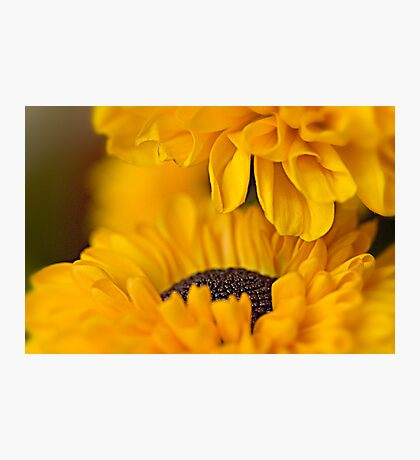 Summer Gold  Photographic Print