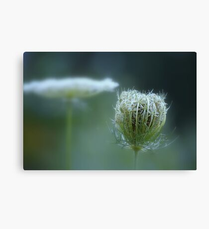 Stages ~ flower & seedpod Canvas Print