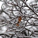 Hanging on through Old Man Winter by Larry Llewellyn