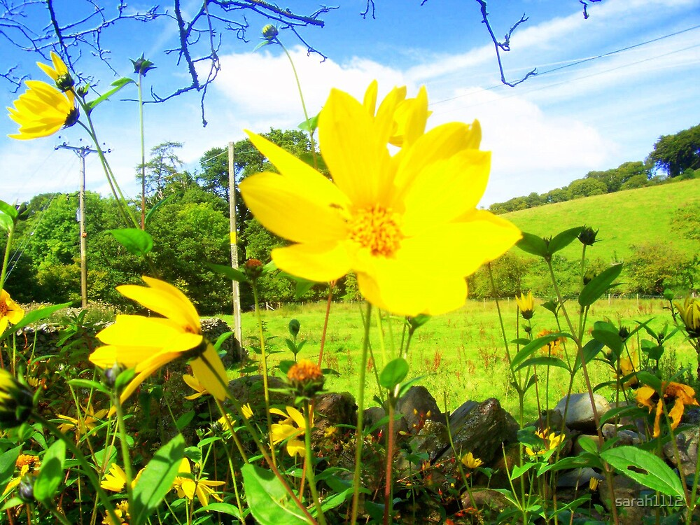 Flower by sarah1112