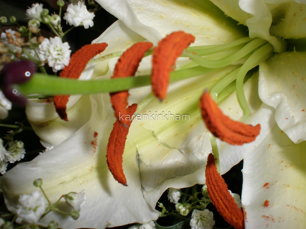 lily by karenkirkham