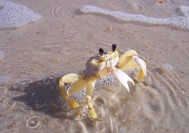 Mr. Crabby by garain