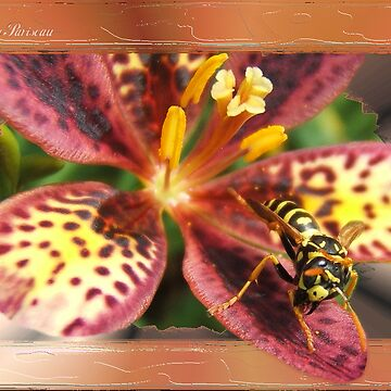 Yellow Jacket W/Frame by Andy2302