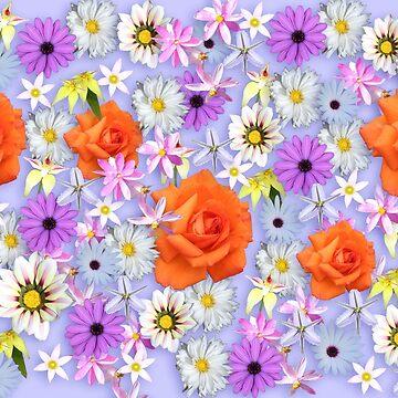 Orange Rose by STHogan