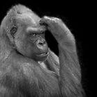 B&W Gorilla by sjphotocomau