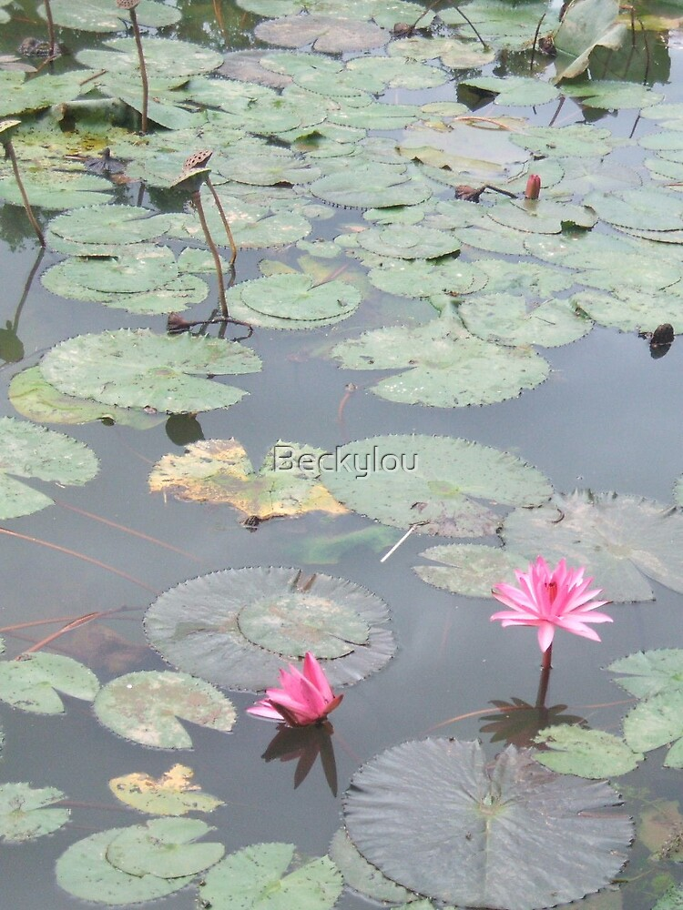 Reflected lily by Beckylou
