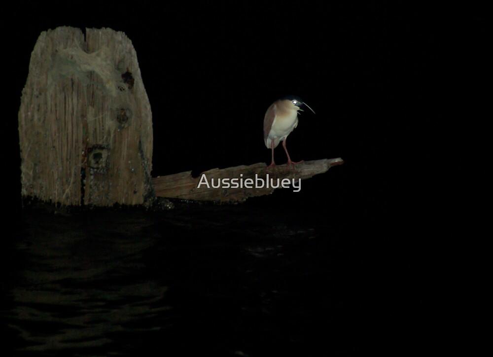 Night Heron. by Aussiebluey