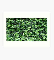 Leafy Art Print