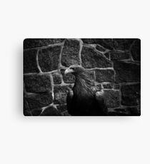 eagle, bird black and white Canvas Print