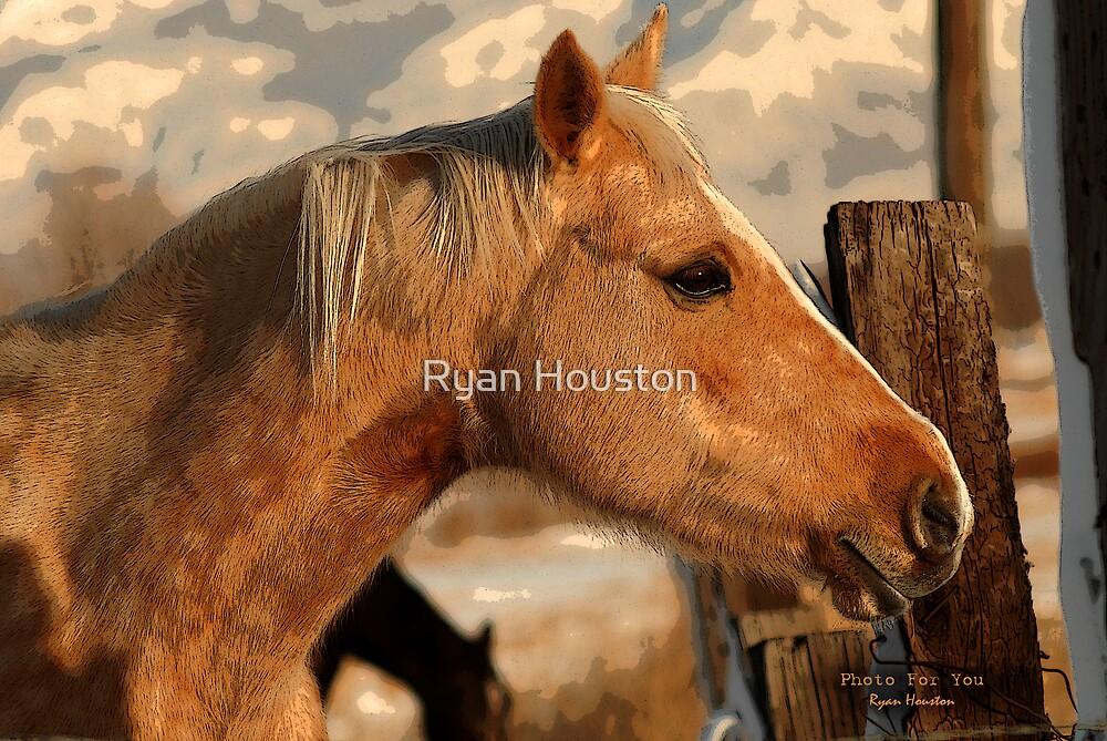 Golden Palamino by Ryan Houston