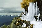 Icicles - Lady Northcotes Canyon by Travis Easton