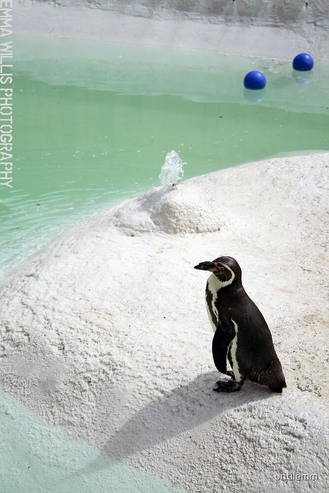 Penguin. by untilemm