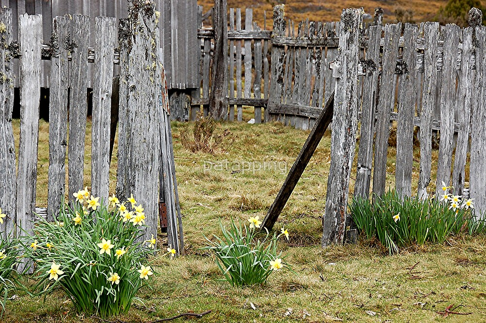 Old Fence by patapping