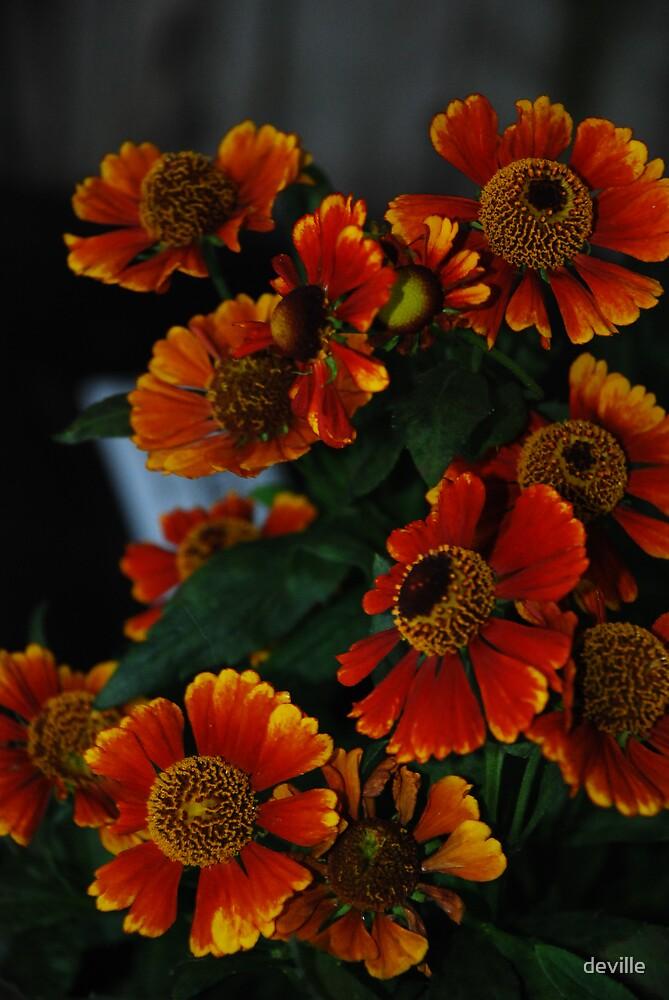 just orange by deville