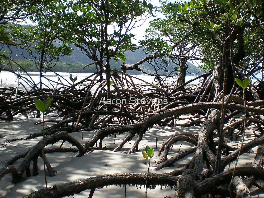 Mangroves by Aaron Stevens