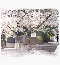 Blooming Cherry Blossom Tree Poster