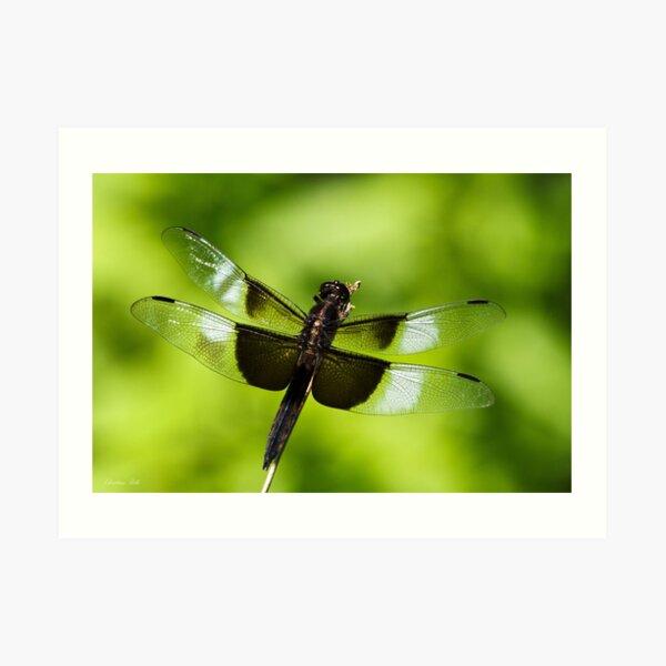 Dragonfly Close up Art Print