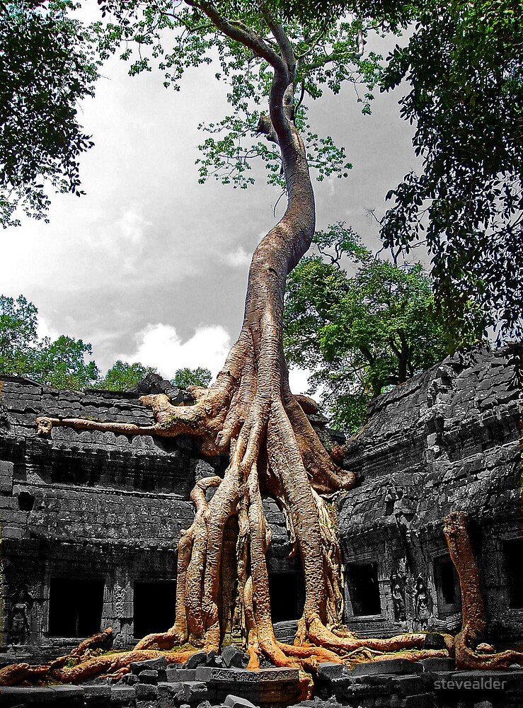 Roots Of Life by stevealder