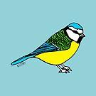 Bluetit - Bird Illustration by Hannah Sterry