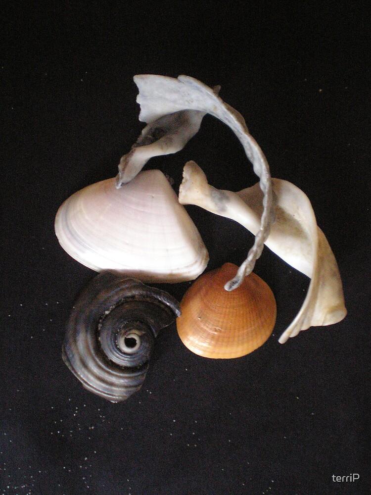 seashells on black by terriP