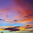 Tropical FNQ Sunset Splendor  by Kerryn Madsen-Pietsch