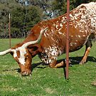 The grass is always greener on the other side of the fence . . .  by Bonnie T.  Barry