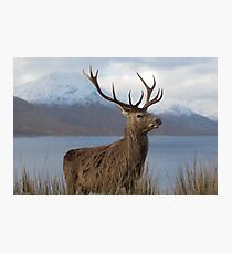 Red Deer Stag in Winter Photographic Print