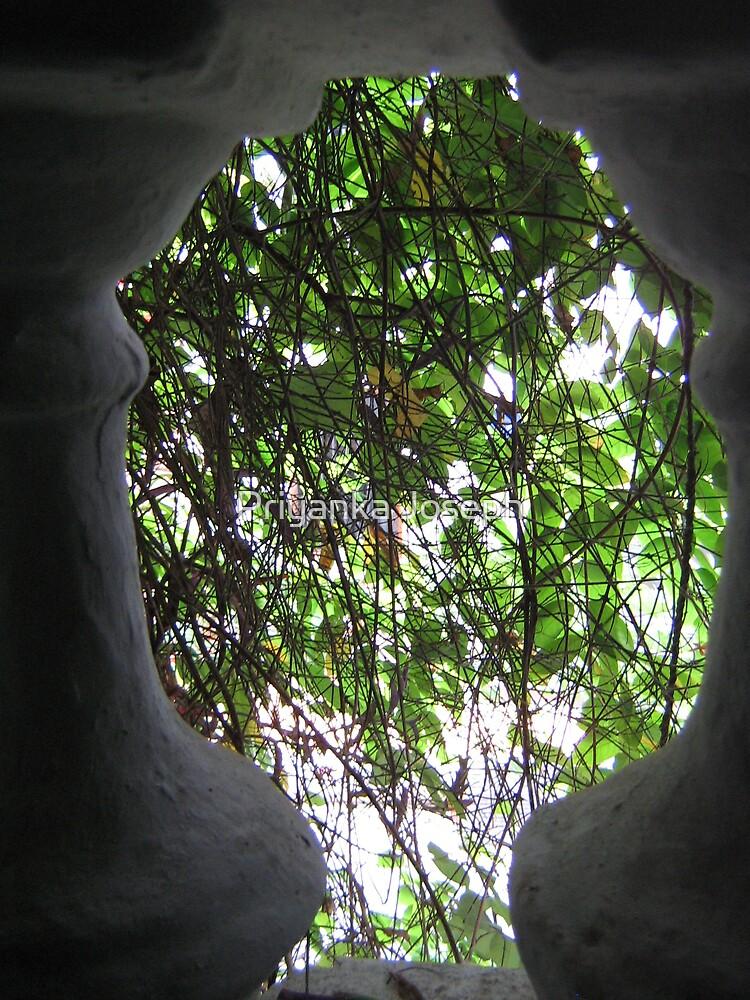 Behind the garden walls by Priyanka Joseph