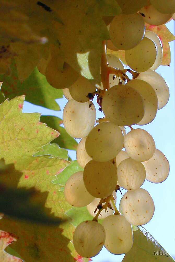 Grapes On The Vine by Mibby