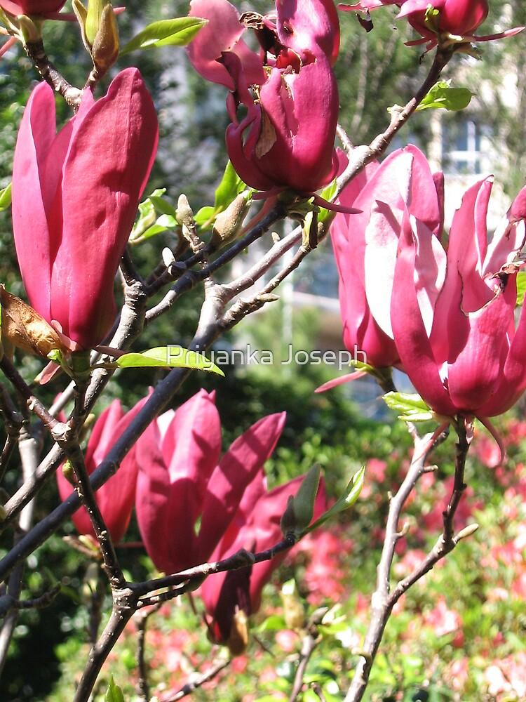 Tree Tulips # 2 by Priyanka Joseph