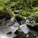 Woodland Waterfall in North Wales by Victoria Ashman