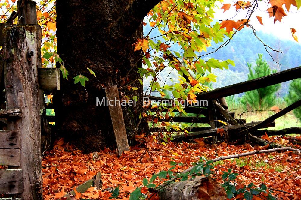 Through Autumns Golden Gown... by Michael  Bermingham