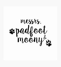 messrs. padfoot & moony Photographic Print