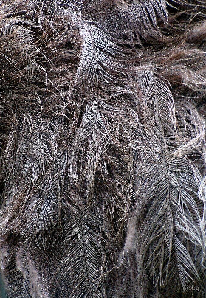 Ostrich Feathers by Mibby