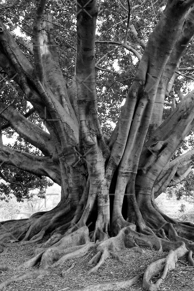 Tree near Sydney Opera House. by Victoria Ashman