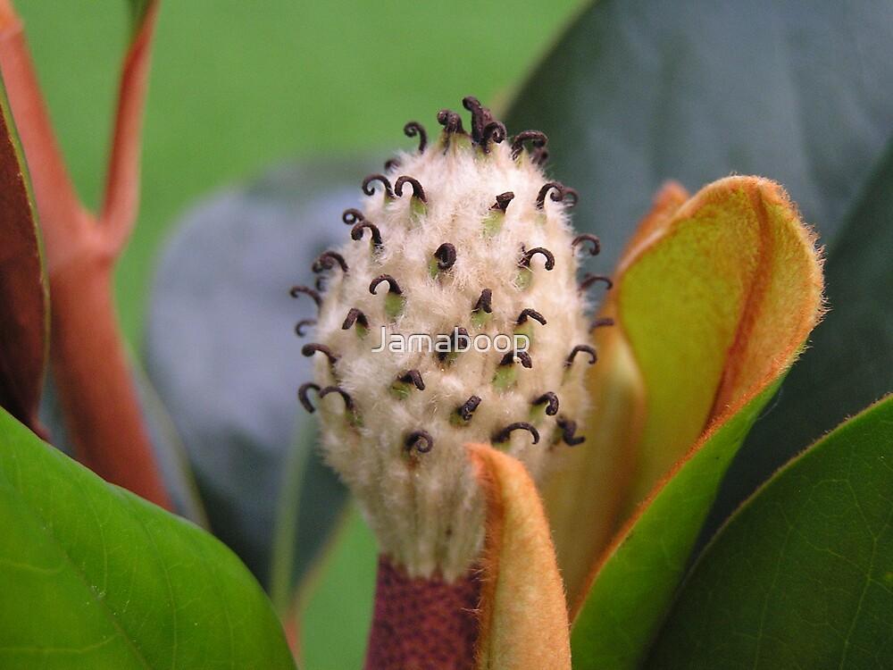 Magnolia center by Jamaboop
